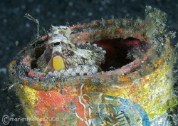 Canned octopus.